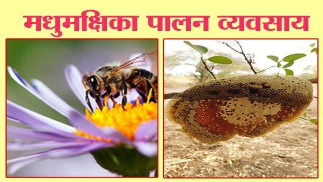 मधुमक्षिका पालन व्यवसाय