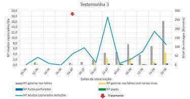 Figura 6 – Evolução do número de capturas diárias na armadilha delta de adultos de Tuta absoluta e estragos causados pelas larvas nas plantas de tomateiro medidos em número de galerias nas folhas e número de frutos com galerias em 30 plantas casualizadas semanalmente de forma aleatória na estufa do Testemunha 3. Este tratamento não foi intencional para a Tuta absoluta Dipel® comercializado pelo Agroquisa em pó molhável (WP) com 3,2% de B. thuringiensis, estirpe kurstaki (serotipo 3A e 3B) teve alguma ação na traça-do-tomateiro