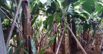 Madeira disponibiliza Banco de Terrenos para estimular investimento na agricultura