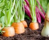 Europa com nova regulamentação para proteção contra pragas de vegetais