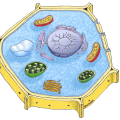 Search plant cell picture myideasbedroom com