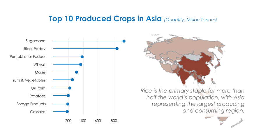 Rice is the primary staple for more than half the world's population, with Asia representing the largest producing and consuming region.