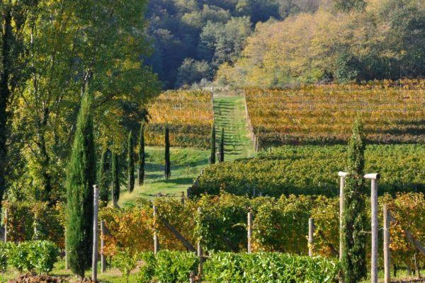 Agriturismo Il Roncal Cividale del Friuli FriuliVenezia