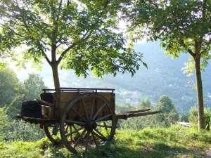 Dettaglio Agriturismo - Carretto Antico