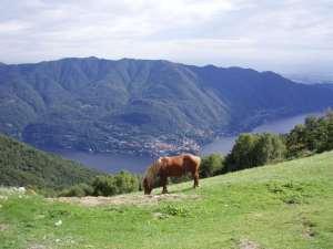 Panorama Dintorni - Cavallo Selvatico e Vista Lago