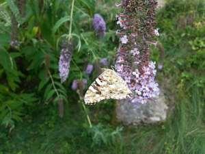 Natura Circostante - Chiusura Alare Farfalla