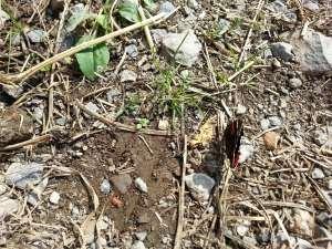 Natura Circostante - Farfalla Rara