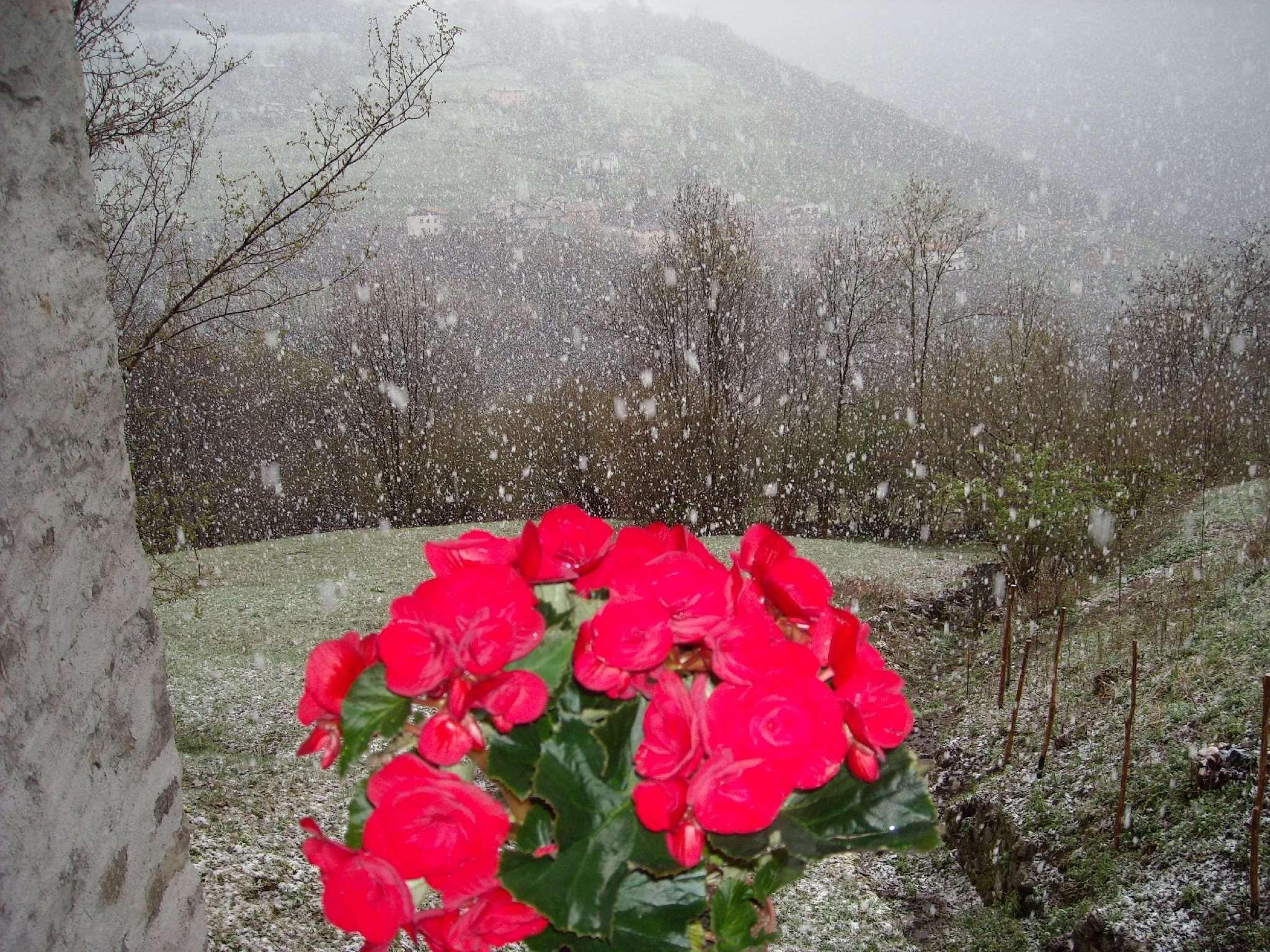 Vista Al-Marnich - Grande Nevicata