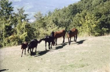 Le Querciole un agriturismo in provincia di Parma Emilia Romagna Italia