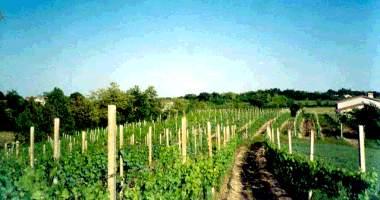 Le Vigne di Adamo a holiday farm in the province of Mantova