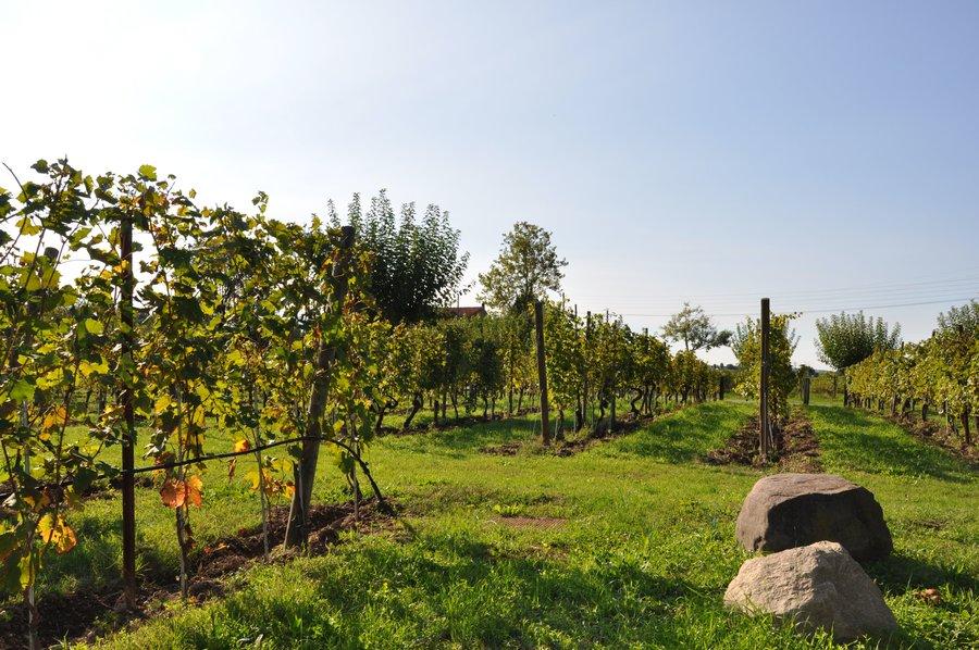 Agriturismo Armea a Desenzano del Garda  S Martino della Battaglia Brescia  Lombardia