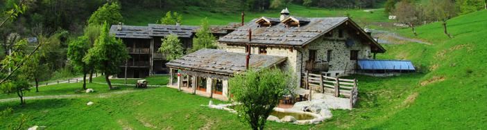 AGRIFOGLIO  Limone Piemonte