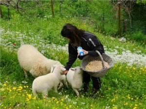 la-fattoria-didattica-del-Macereto-animali