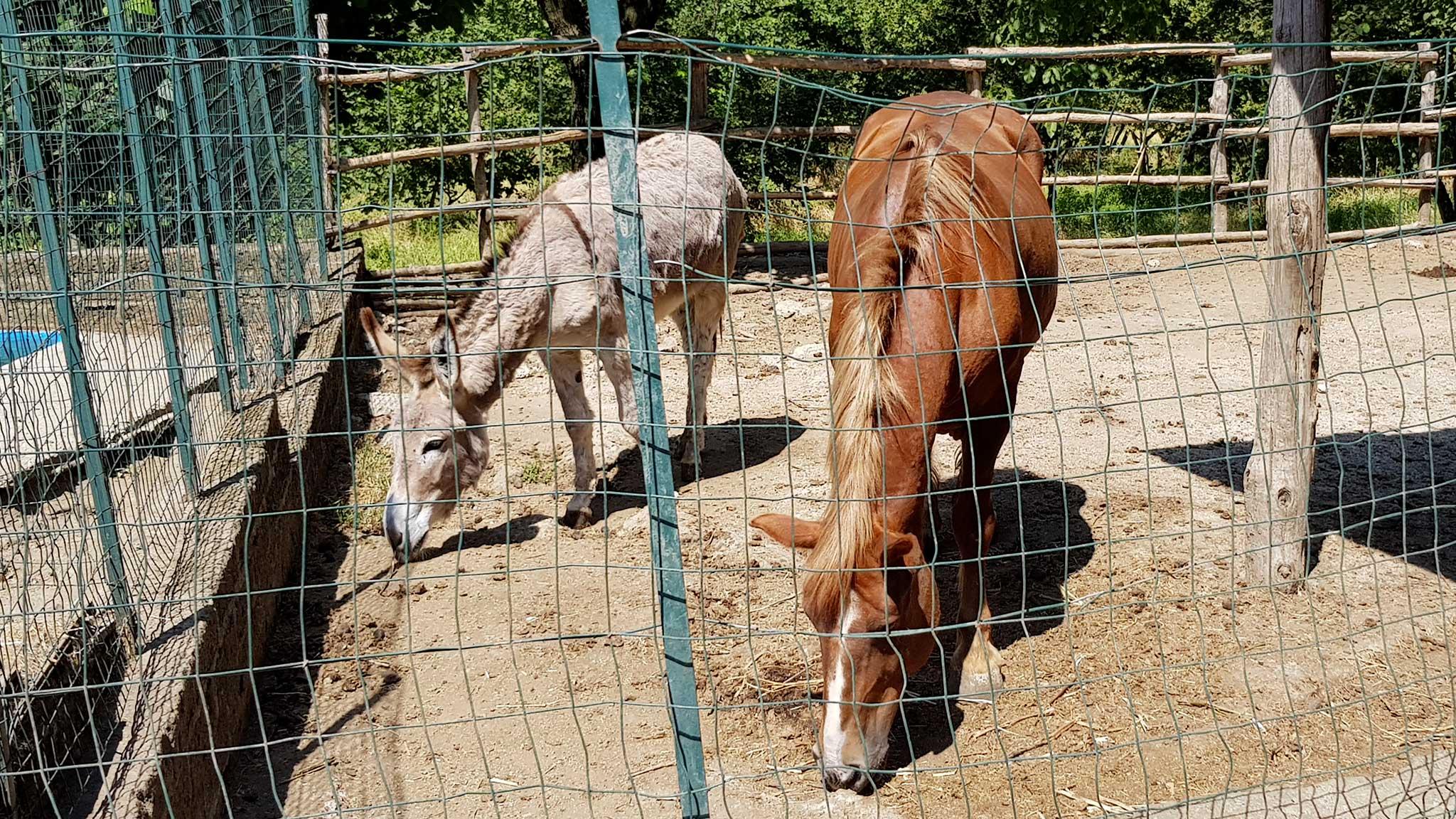 Lo zoo dell'Agriturismo Ricciardelli