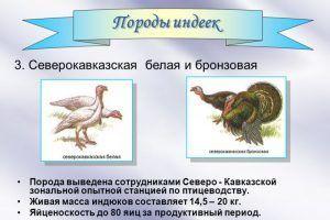 Породы индеек