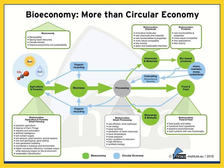 Agronetwork News - Daniel Rossi - Bioeconomia_Page_06