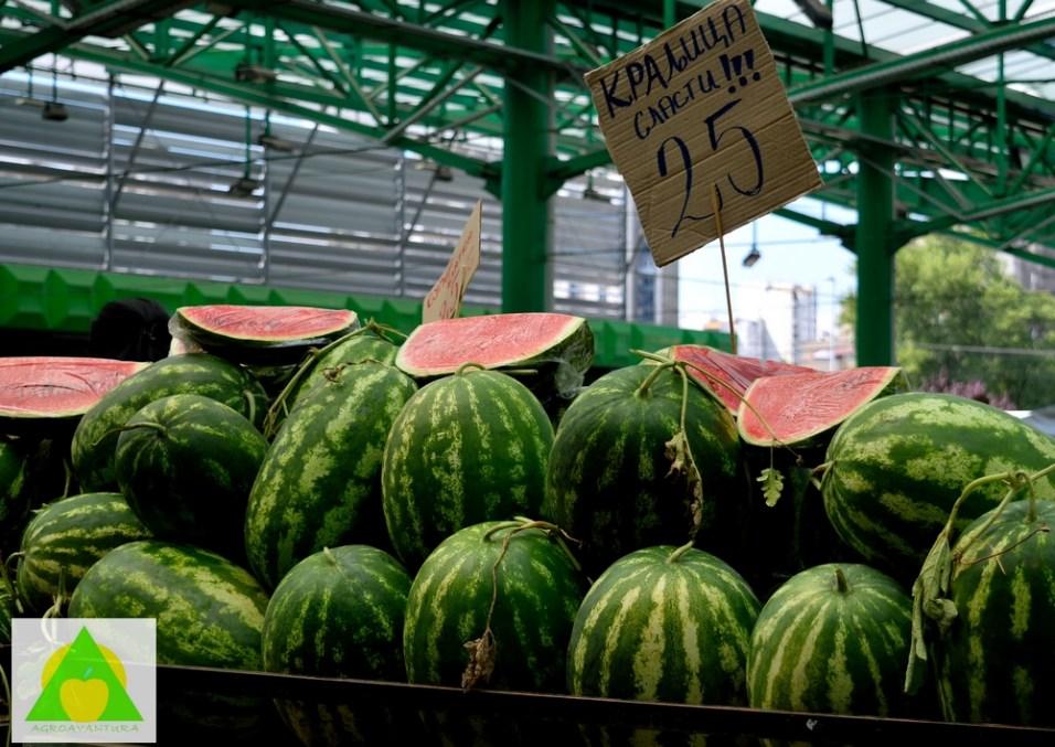 Česte i obilne padavine uticale su na smanjen sadržaj šećera u plodovima lubenice