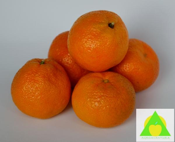 Agrumi predstavljaju veliku grupu tropskih vocaka u koju spadaju i mandarine