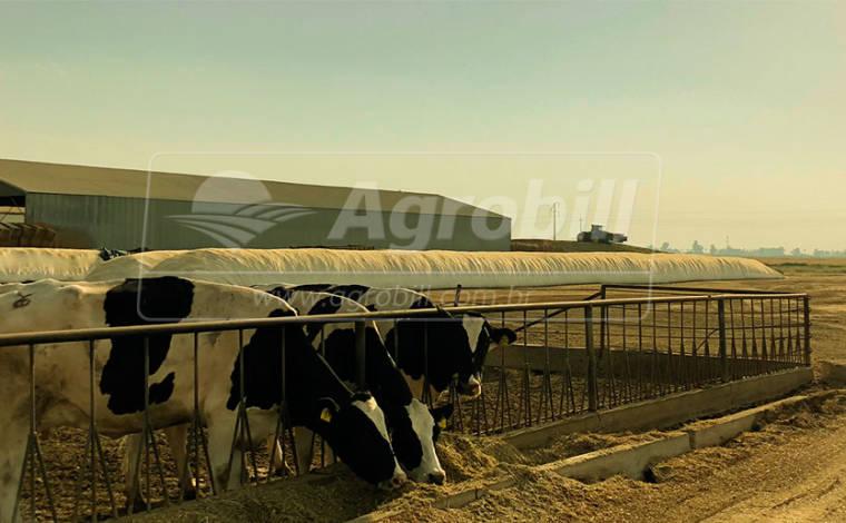 Lona de plástico para Silagem BPF 10 x 50 – Pacifil > Novo - Lonas - Pacifil - Agrobill - Tratores, Implementos Agrícolas, Pneus