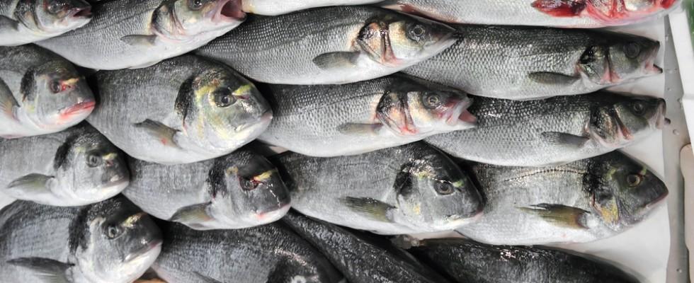 Fish Track imorinta digitale dei pesci contro le frodi  Agrodolce