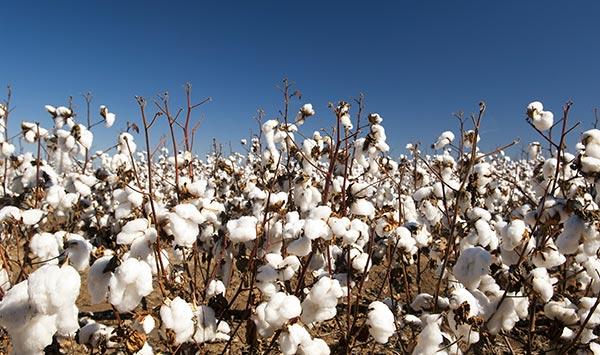 Νέα συμφωνία της της BASF στον τομέα των σπόρων και ενός μη-εκλεκτικού ζιζανιοκτόνου