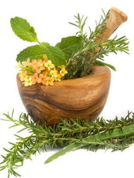 plantas Medicinales imprescidibles en el huerto