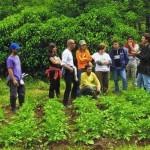 Hongos en el huerto: Diferencia entre Oidio, Mildiu, Roya y Botritis