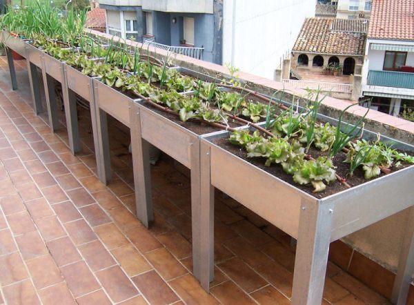 Cómo cultivar un huerto ecológico en casa