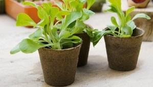 Macetas biodegradables: Materiales reciclados para el huerto
