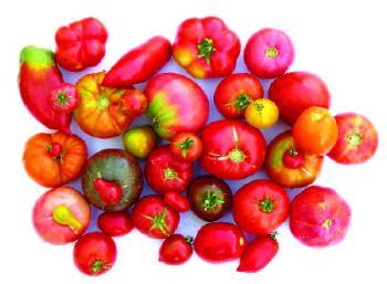qué son las variedades locales e importancia