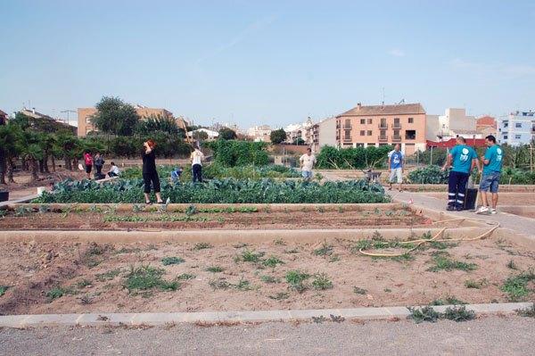 Alquilar huerto en Valencia. Parcela libre
