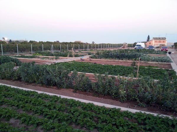 Alquilar huerto en valencia que mejor sitio que en for Parcelas para alquilar en sevilla