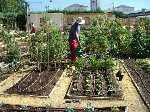 Bancales de cultivo en los huertos de Montecarmelo