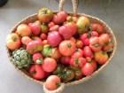 Rajado del tomate: ¿Por qué se parten los tomates?