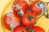 Hongos en las Plantas: Cómo Prevenir y Eliminar. Tipos de Fungicidas Naturales
