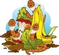 Compost de lombriz: Qué es la vermicultura y cómo hacer abono casero