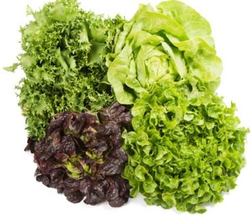 Cultivar lechugas: 4 variedades