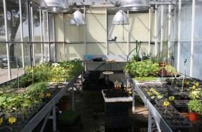 Manejo ecológico en el huerto de la Escuela de Agrónomos: Paso a paso