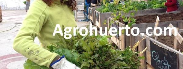 Agrohuerto.com - Asesoramiento Huertos urbanos ecológicos