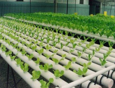 Sistema hidroponico donde podemos ver las tuberias que se usan - tecagricolas.blogspot.com