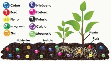 Algunos de los nutrientes necesarios para la planta  - www.hydroenv.com.mx
