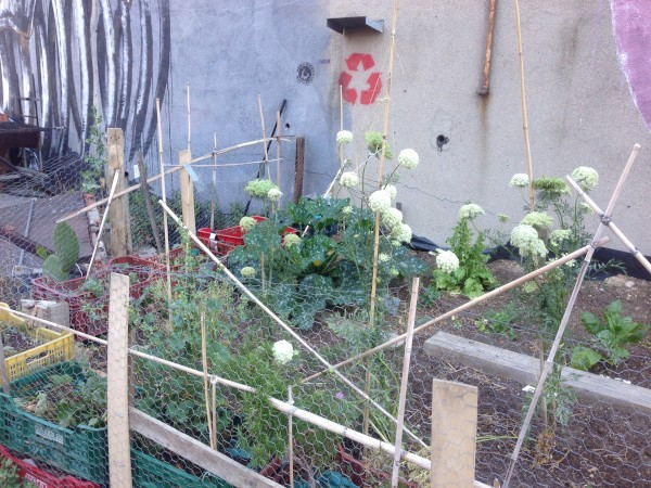 Bancales de cultivo en Huerto La Tabacalera