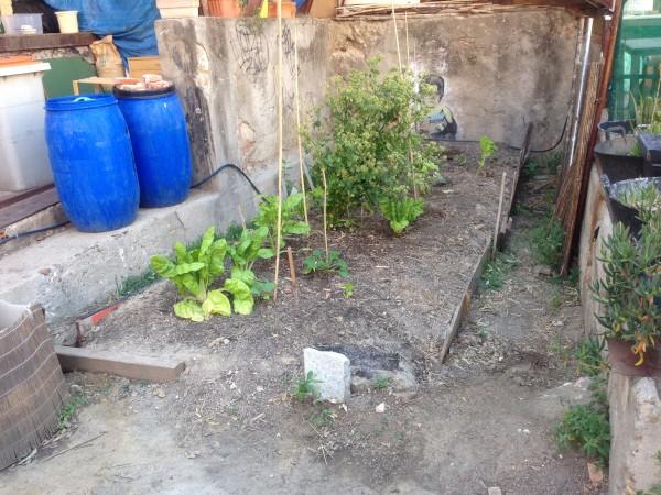 Huerto urbano en la Tabacalera