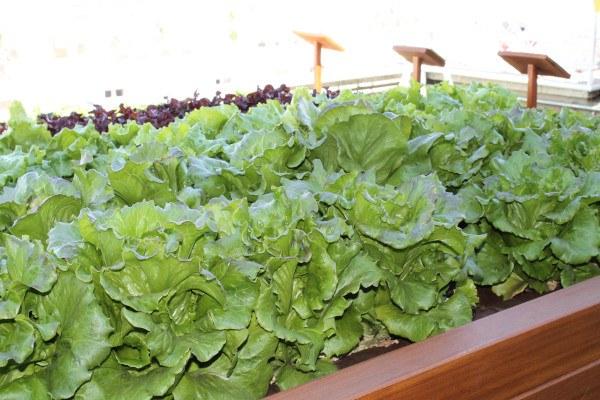 Blanqueo de hortalizas