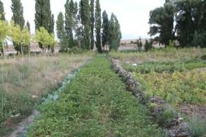 Los Huertos Tradicionales de Antes: descubriendo Urueñas (Segovia)