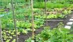 Cómo planificar el huerto durante el año: de Abril a Septiembre