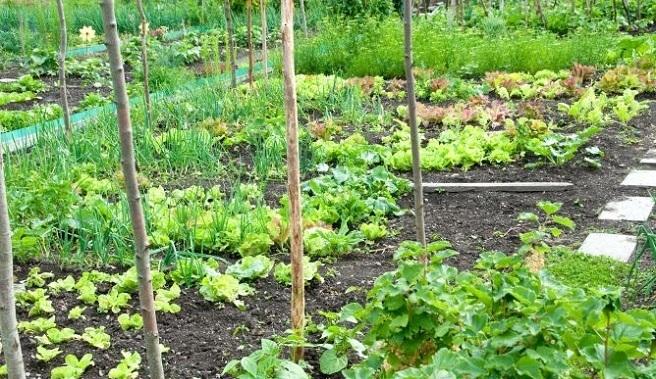 Huerto en abril - jardinplantas.com