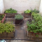 Cómo cultivar un huerto urbano en terraza