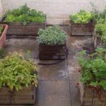 Cómo cultivar un huerto urbano en una Terraza: Guía completa