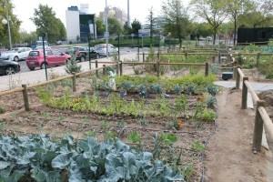 Rotación de Cultivos en el Huerto Ecológico: Guía completa
